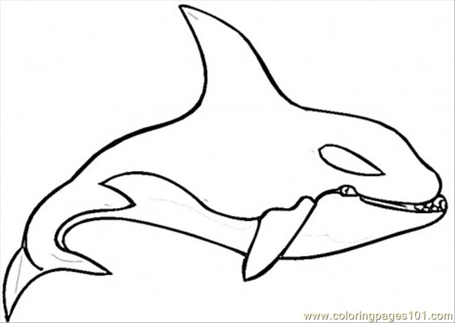 killer whale coloring page coloring page free whale coloring