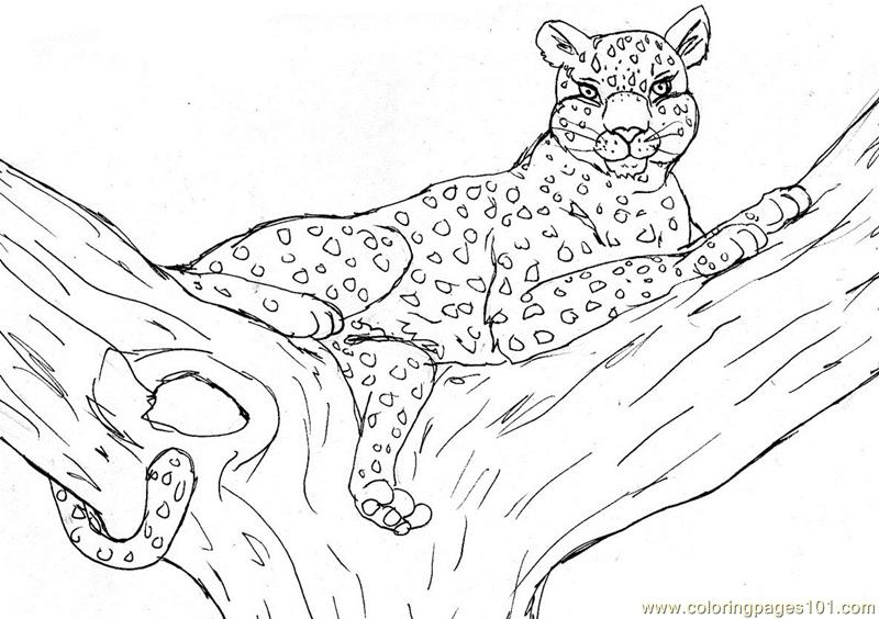 leopard coloring page free cheetah coloring pages