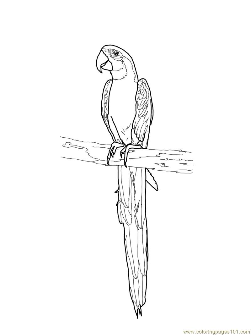 blue and gold macaw coloring page free parrots coloring pages