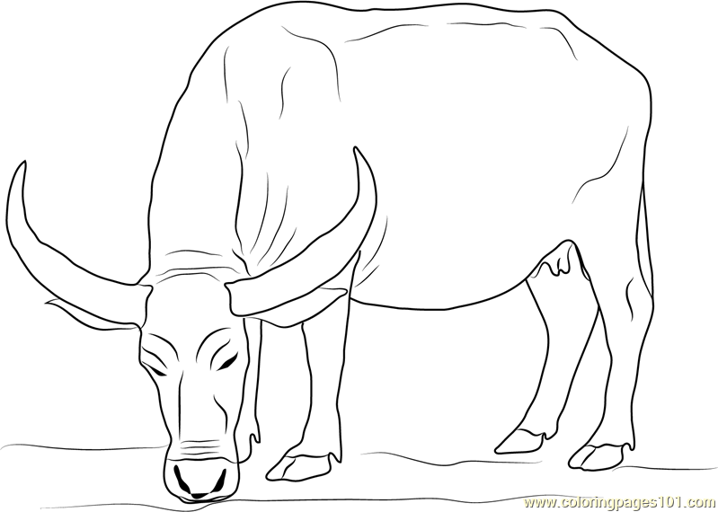 water buffalo coloring pages  food ideas