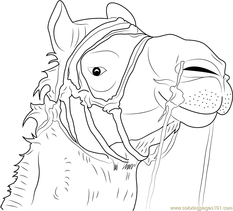 camel face coloring page free camel coloring pages