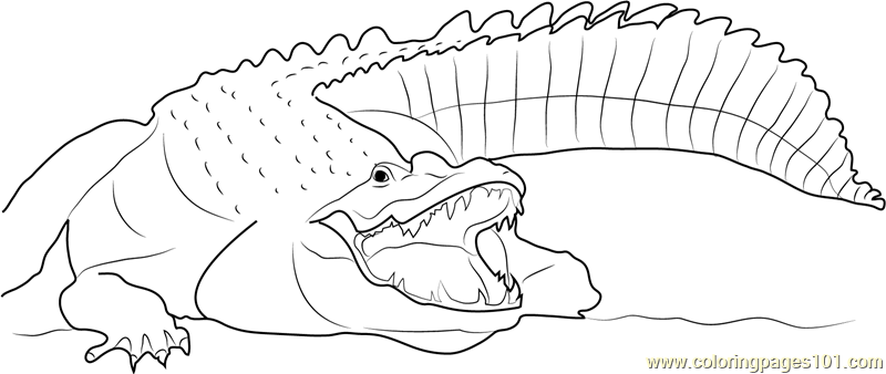 adult nile crocodile coloring page free crocodile coloring pages