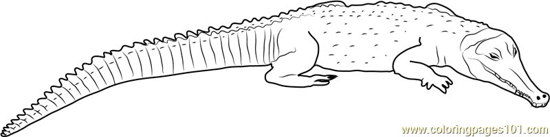 snouted crocodile coloring page free crocodile coloring pages