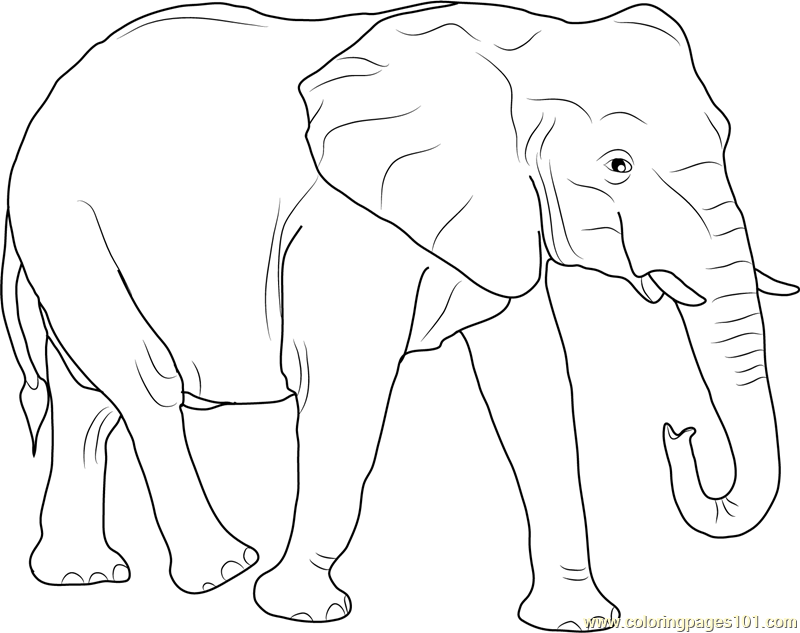 African Elephant Coloring Page Free Elephant Coloring Pages Coloringpages101 Com