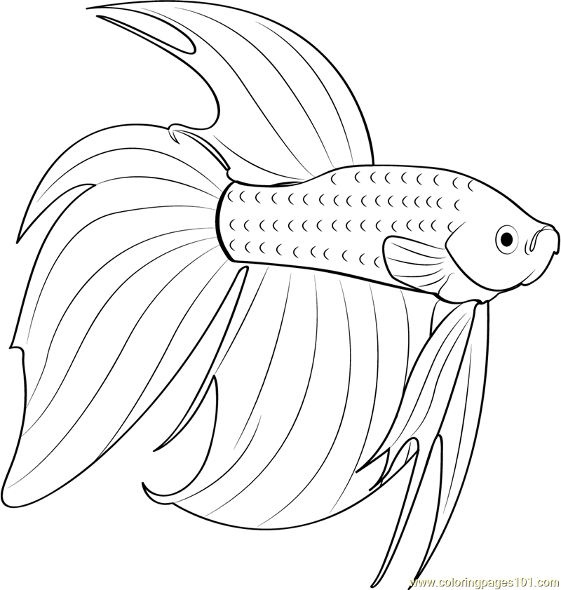 Betta Red Fish Coloring Page Free Other Fish Coloring