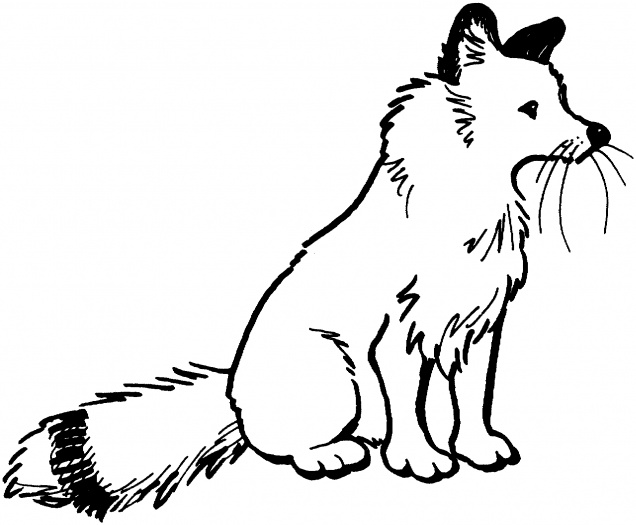 fox 2 coloring page