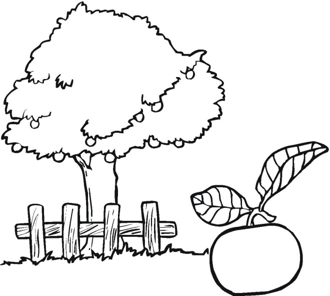 apple tree coloring pages 7 com jpg
