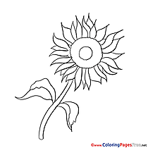 sunflower coloring sheets download free hits 7
