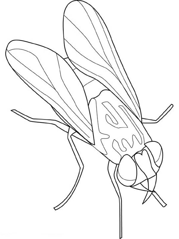 Animal Kingdom Fly Insect Coloring Page Coloring Sky