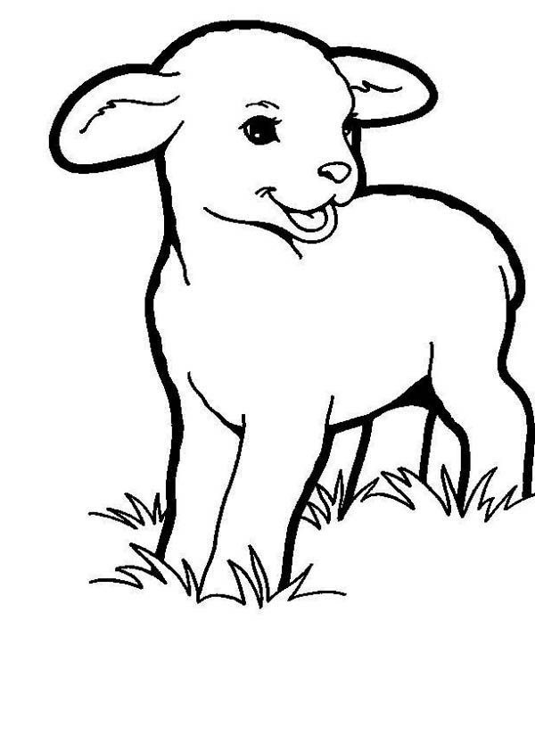 baby lamb eating grass coloring page coloring sky