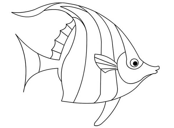 Beautiful Angel Fish Coloring Page Coloring Sky
