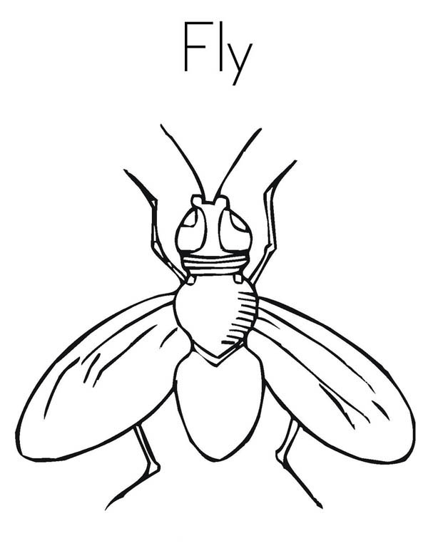 house fly coloring page house fly coloring page coloring sky