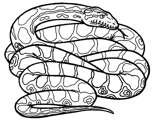 free how to draw a cobra coloring pages