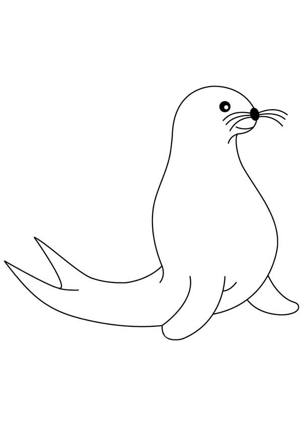 seal animals coloring coloring pages