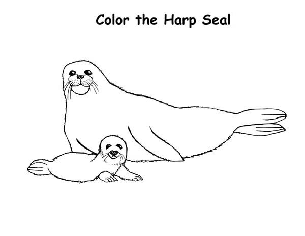 baby harp seal and his mother coloring page coloring sky
