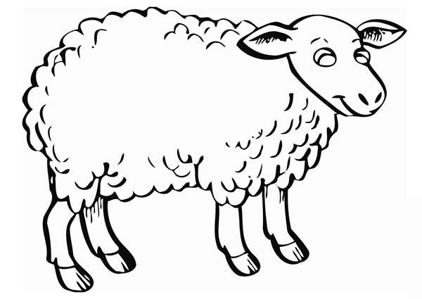 fluffy sheep coloring page coloring sky