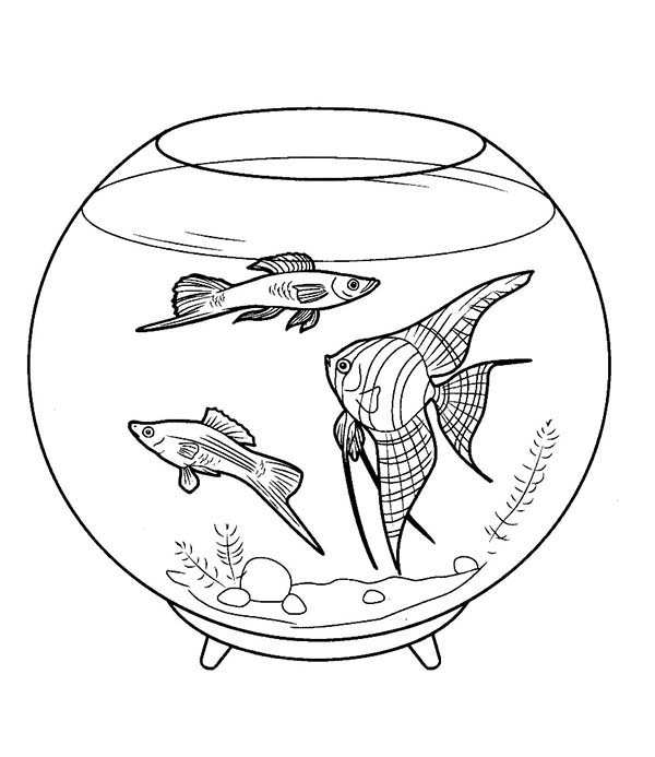 pet fish in a fish bowl coloring page coloring sky