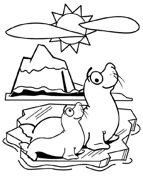pin baby harp seal coloring page on pinterest