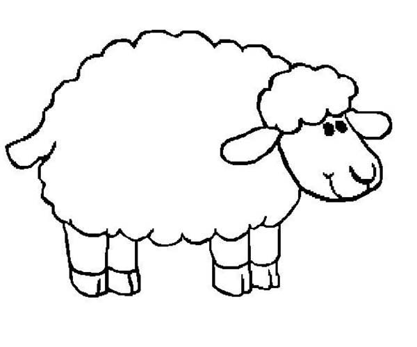 sheep soft fur coloring page coloring sky