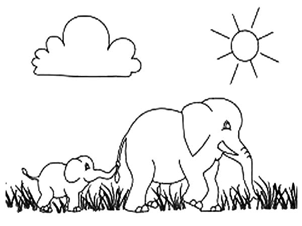 african elephant walking march with her son coloring pages