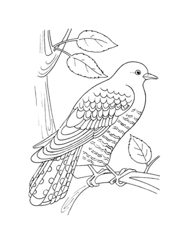 Coo Coo Bird Pictures Coloring Coloring Pages