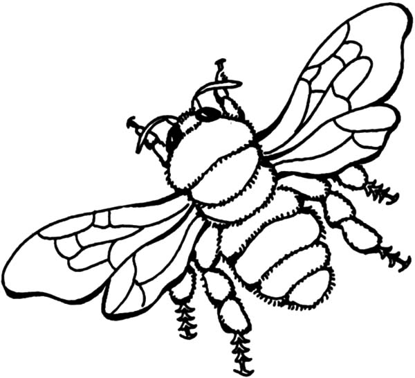 bee flying honey bee coloring pages flying honey bee coloring pages