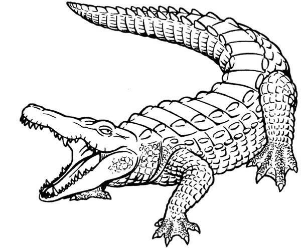 beautiful skin of crocodile coloring page coloring sun