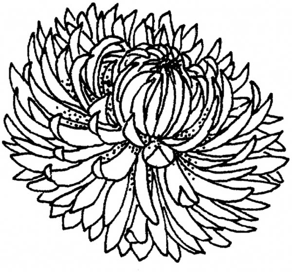 Chrysanthemum Book Coloring Pages | Krazy For Kevin Henkes | 1st ... | 560x600