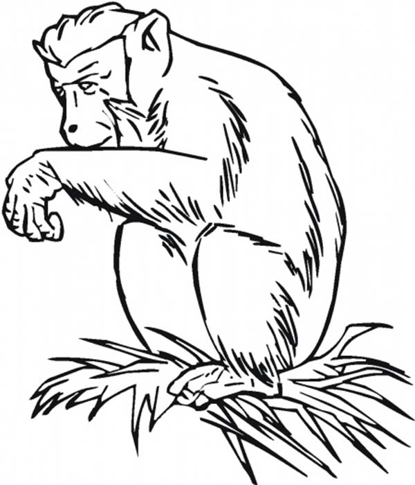 chimpanzee sitting on grass coloring page coloring sun
