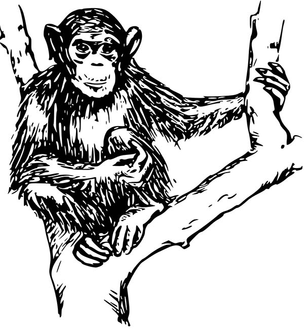 chimpanzee sitting on tree coloring page coloring sun