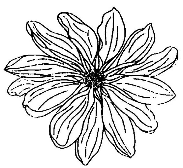 Chrysanthemum by Kevin Henkes Coloring Pages | ... story mapping ... | 551x600