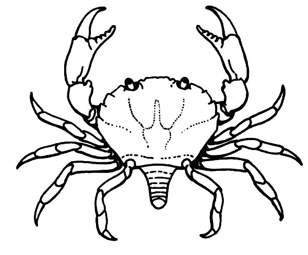 crab crab breeding