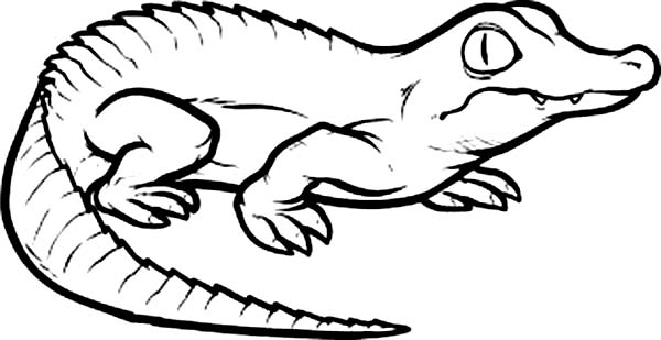 crocodile coloring page for kids coloring sun