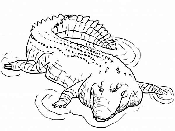 freshwater crocodile coloring page coloring sun
