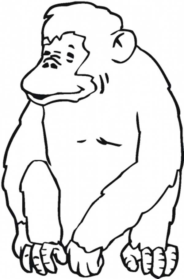 laughing chimpanzee coloring page coloring sun