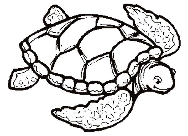please love this sea turtle coloring page coloring sun