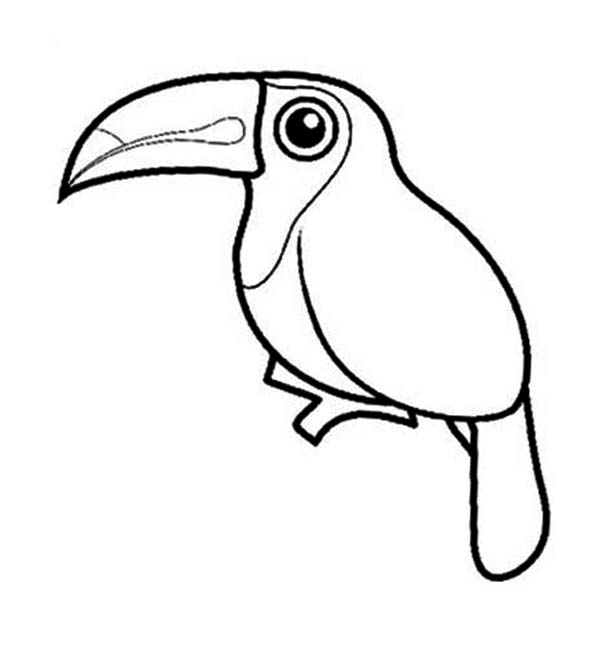 sketch of a toucan bird coloring pages