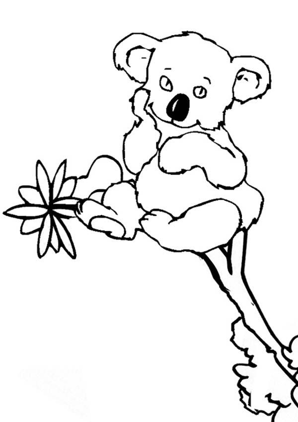 cute little koala bear coloring page color luna