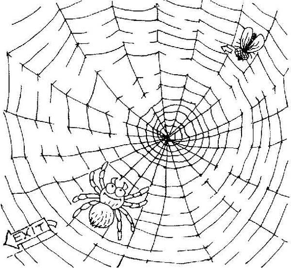 fly trapped on spider web coloring page color luna