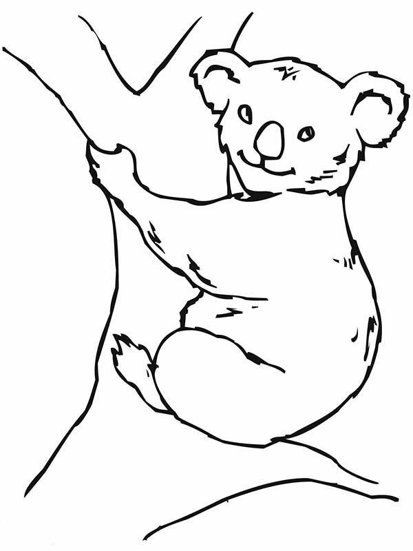 koala bear on big tree coloring page color luna
