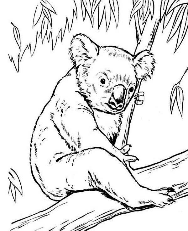 on eucalyptus tree c