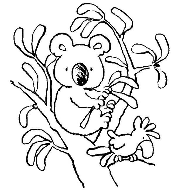 koala bear in koala brothers 3 coloring page color luna