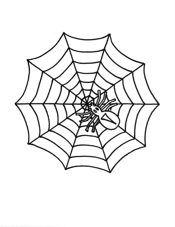 little spider on spider web coloring page color luna
