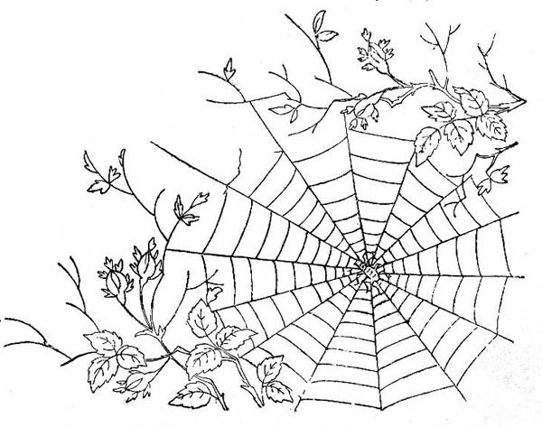 spider spider web between tree branch coloring page
