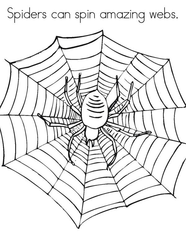 spiders can spin amazing spider web coloring page color luna