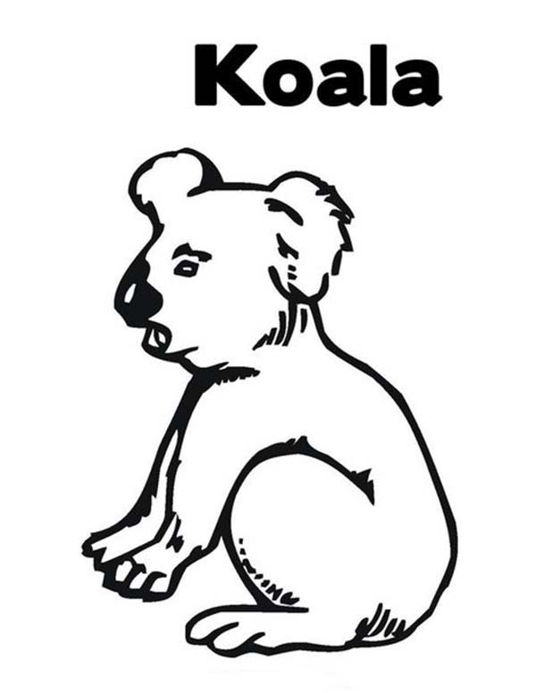 thirsty koala bear coloring page color luna