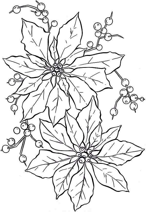 beautiful poinsettia flower coloring page color luna