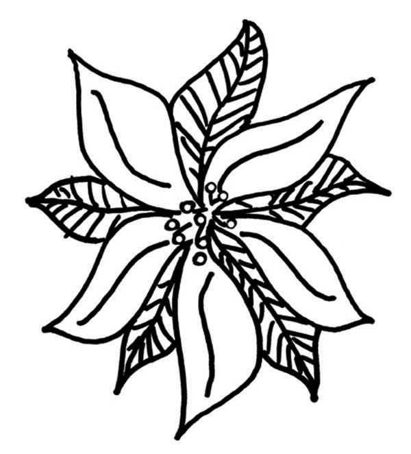 drawing of poinsettia coloring page color luna