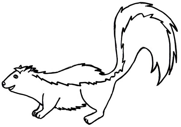 pin skunk coloring page on pinterest