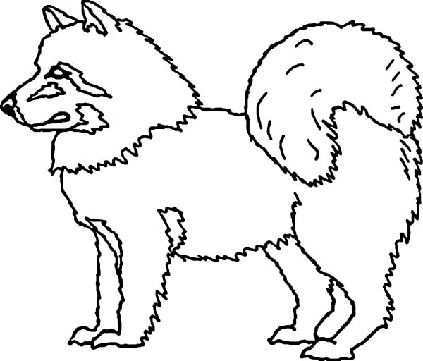 husky dog is eskimo pet coloring page color luna